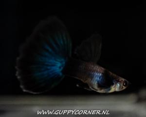 Asain Blue