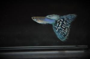 Japan Blue Mosaic 1